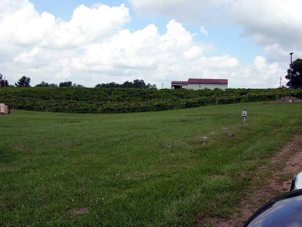 A portion of the vinyard at Les Bourgeois in Rocheport, Missouri