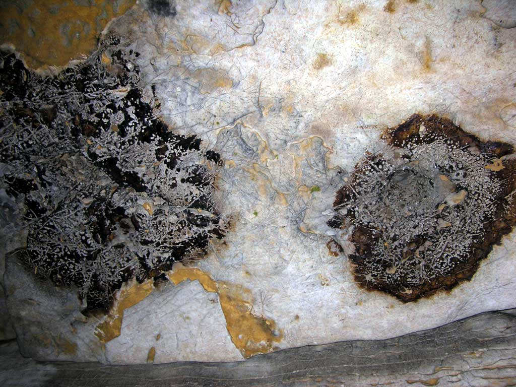 Bat droppings on the ceiling inside the Mark Twain cave in Hannibal, Missouri