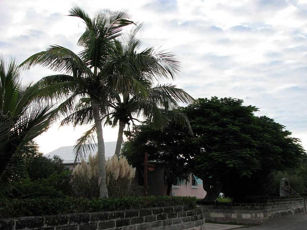 Bermuda Grape Bay Beach Hotel flora