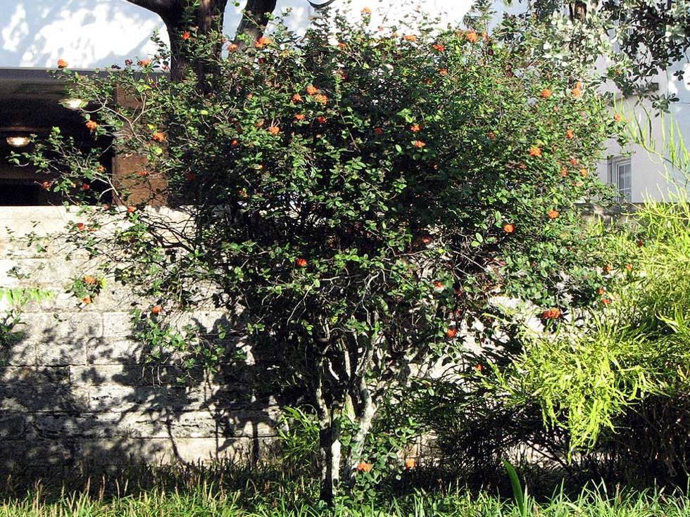 Bermuda Hamilton flora