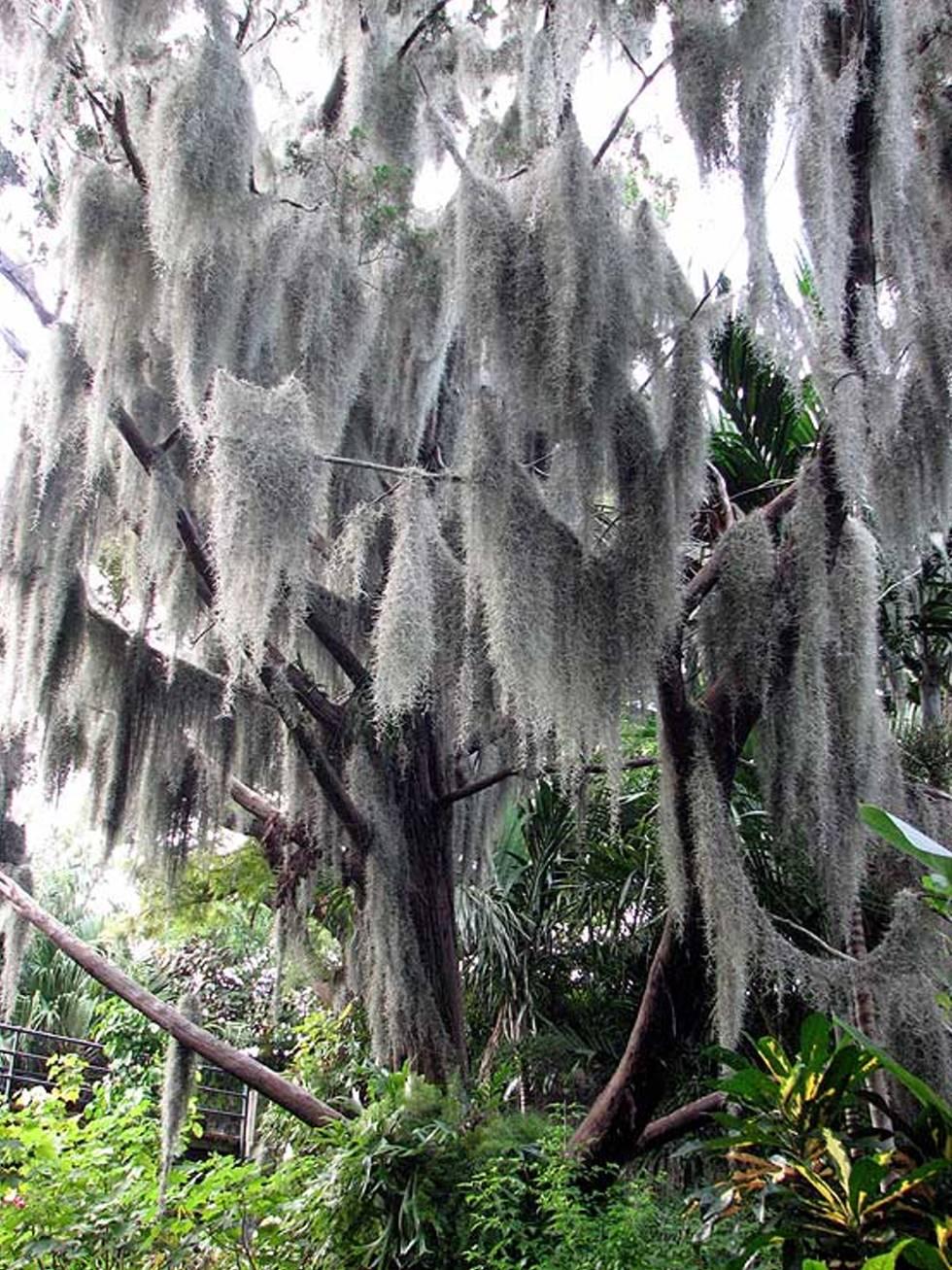 Bermuda Fort Hamilton flora